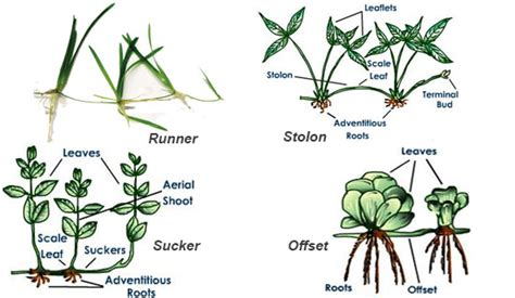 Names Of Modified Roots by Types And Modifications Of Stem