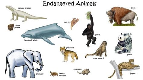 picture  endangered animals  names  kids hd