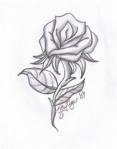Drawings Rose Pencil Library Clipart Clip Awesome