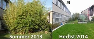 Bambus Im Garten Vernichten : bambus dauerhaft entfernen gr nlive gmbh ~ Michelbontemps.com Haus und Dekorationen