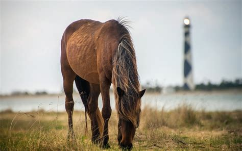 High Resolution Photo Of The Horse, Image Of Lighthouse