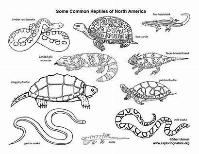 Reptiles Coloring Animals North America Pages Monster