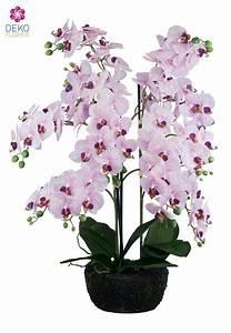 Luftwurzeln Bei Orchideen : k nstliche orchidee wei rosa 70 cm ~ Frokenaadalensverden.com Haus und Dekorationen