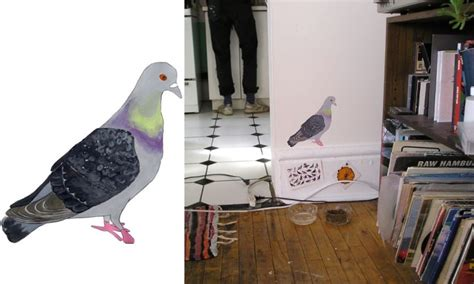 annie dunning  pigeon homing project