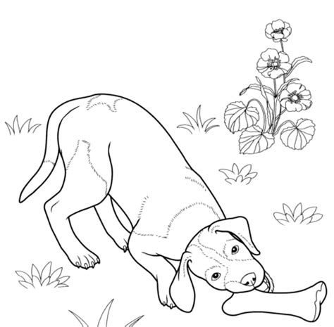 german shorthaired pointer coloring page  printable coloring pages