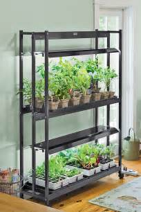 growing lettuce indoors best types of lettuce variety how to grow