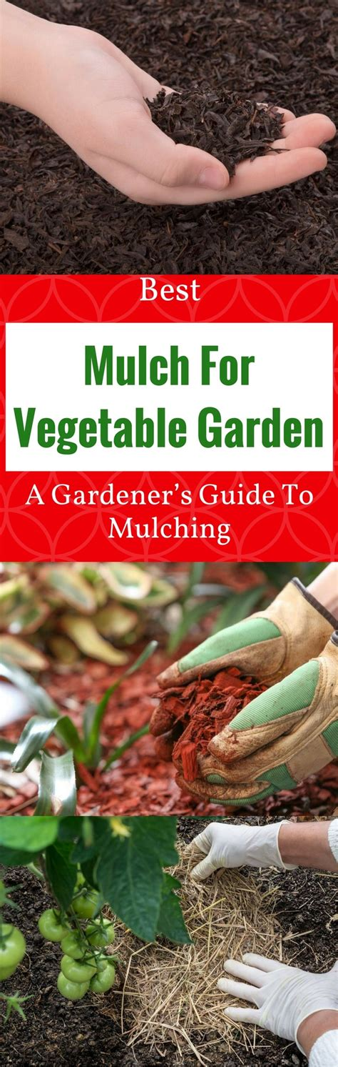 Best Mulch For Vegetable Garden 2018 A Gardener's Guide