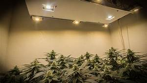 10 DIY Led Grow Lights For Growing Plants Indoors – Home