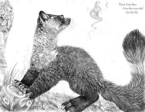 Just A Pine Marten By Sabretoothedermine -- Fur Affinity