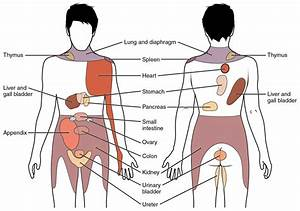 Back Pain Anatomy Chart