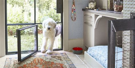 pet parents dream home   doggy room house