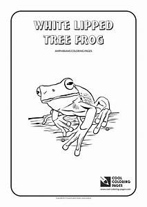 Amphibians And Reptiles Coloring Pages