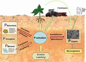 Phosphorus Cycle In The Environment