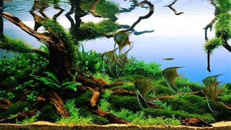 Aquascape Competition by Aga Aquascaping Contest Delivers Stunning Freshwater Views