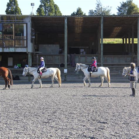 riding lessons sonshine ranch lesson nz into
