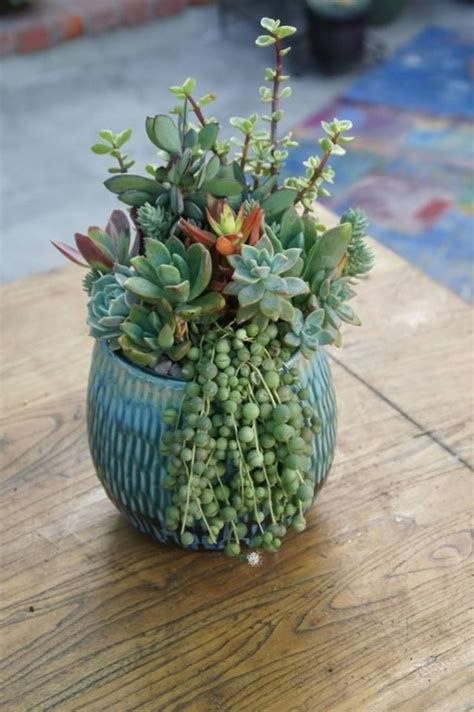 186 Best Images About Cactussucculent Container Gardens