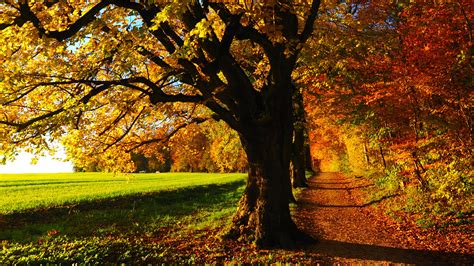 Fall Backgrounds by Fall Forest Wallpaper Mobile Desktop Background