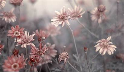 Flowers Grey Dying Flower Wallpapers Pale Nature