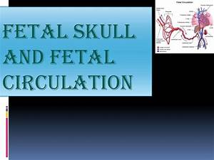 Fetal Skull And Fetal Circulation