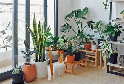 Indoor Garden Plants Beginners Door Patio Gardening