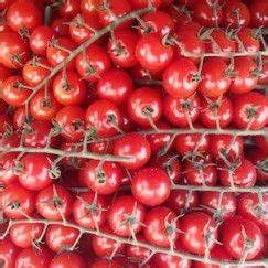 Bohnen Anbauen Anleitung : die besten 17 ideen zu tomaten gew chshaus auf pinterest tomaten im gew chshaus anzucht ~ Whattoseeinmadrid.com Haus und Dekorationen