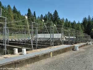 Columbia River Fish Hatchery