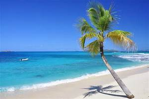 Bilder Am Strand : traumstr nde 15 palme am strand palm island st vincent grenadinen karibik ~ Watch28wear.com Haus und Dekorationen