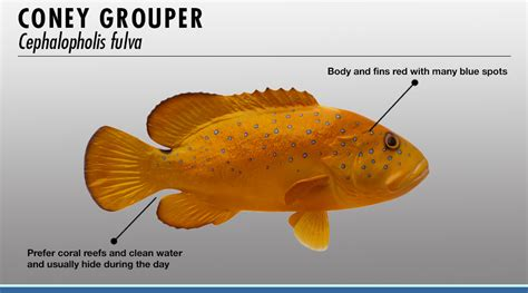 grouper fishtrack identifier related features