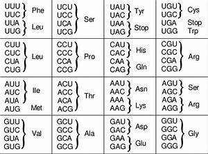 The Codon Table  The Genetic Code Is Composed Of Four Different Letters