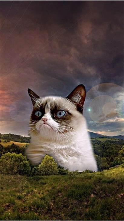Meme Cat Wallpapers Iphone Grumpy Wallpaperaccess Backgrounds