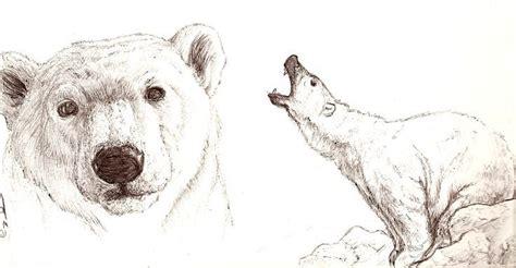 polar  baer skizze baer zeichnung und baeren kunst