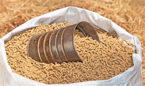 horse feeding feed grain hay five bag pellets pelleted coffee diet measuring