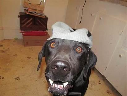 Funny Face Dog Thread Faces