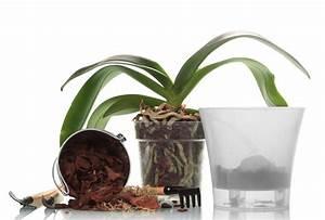 Orchideen Umtopfen Video : orchideen in seramis so verwenden sie das substrat richtig ~ Watch28wear.com Haus und Dekorationen