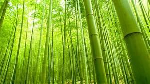Bamboo Forest Wallpaper 48862 1920x1080 px ~ HDWallSource.com