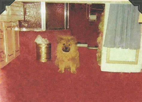 getlow  lindas upstairs bathroom  graceland  dog