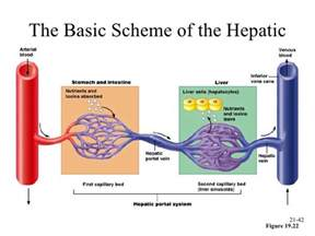 does the hepatic portal system begin and end with