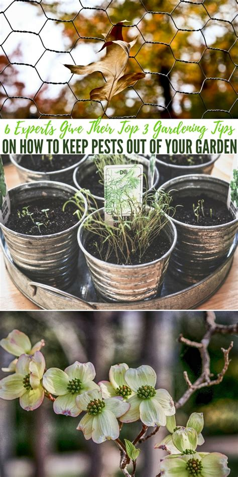 6 Experts Give Their Top 3 Gardening Tips On How To Keep
