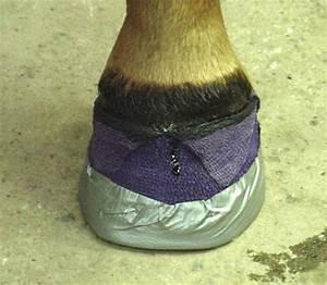 214 Best Horse Info Images On Pinterest