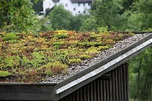 Extensive Dachbegrünung Pflanzen : extensive dachbegr nung aufbau geeignete pflanzen f r ein bl hendes gr ndach vorgestellt teil 2 ~ Frokenaadalensverden.com Haus und Dekorationen