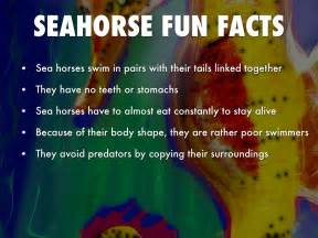 All About Sea Horse U0026 39 S By Zessfullyclean
