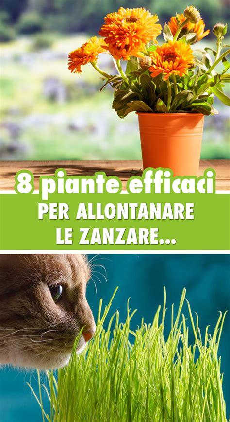 antizanzare giardino piante antizanzare le 8 pi 249 efficaci per giardino e balcone