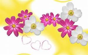HD Flower Wallpaper Free: Flower Wallpaper