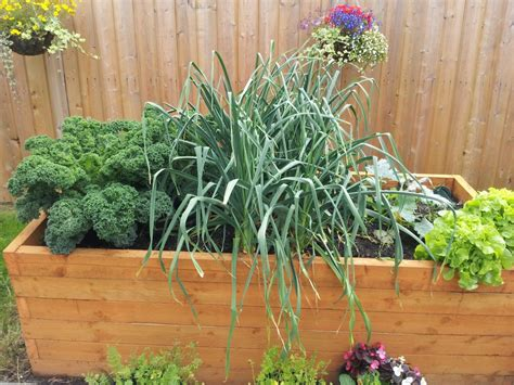 14 Vegetables To Grow In A Small Gardengreenside Up