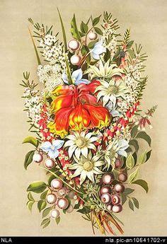 images  australian wildflowers blooming