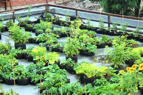 The Best Container Garden  Garden Culture Magazine