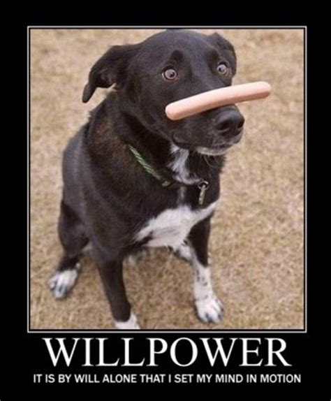 willpower energy  motivation psychology today