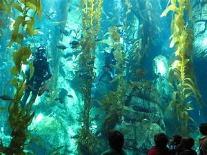 Kelp Forest Images | FemaleCelebrity
