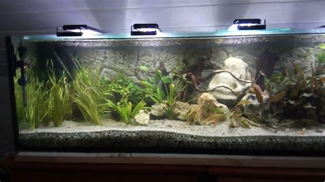 aquarium 600 l 20170420 1821 overview
