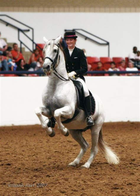 andalusian texas horse breeders sealy